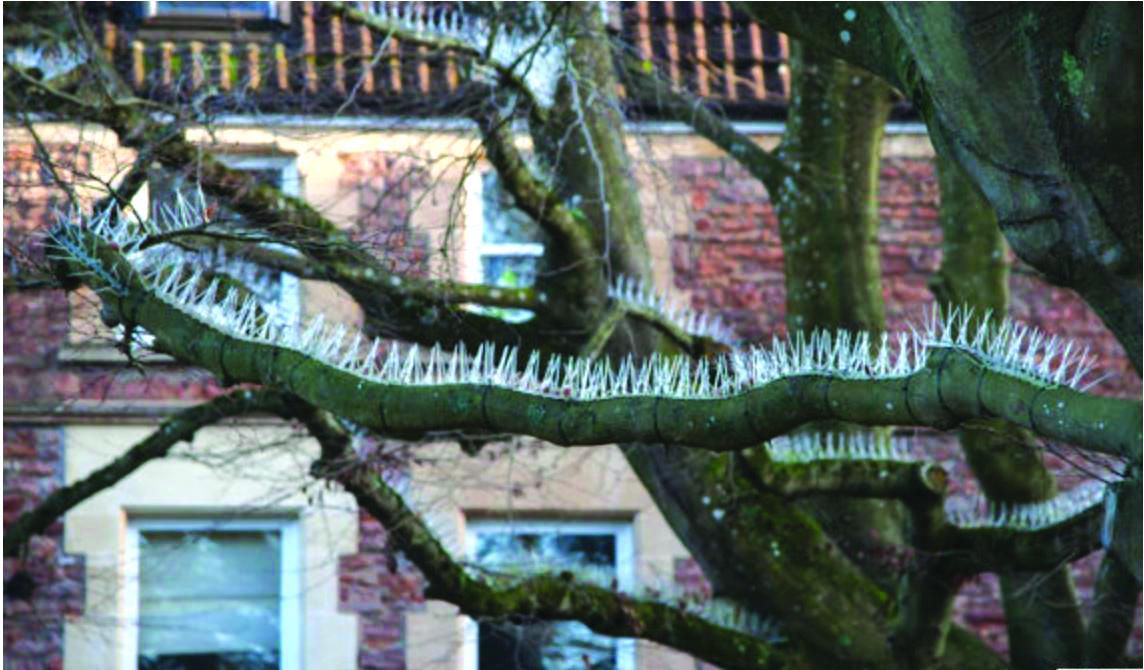 쇠못 나무.JPG